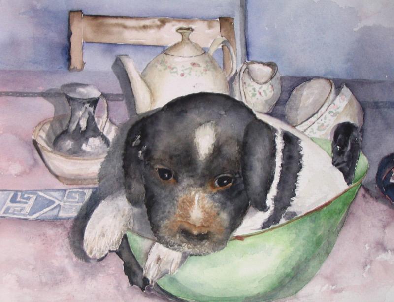 Hond (pup) in schaal