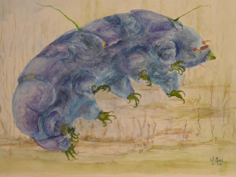 Blauw graafbeest